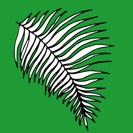 Vector illustration leaves of palm tree on green background.