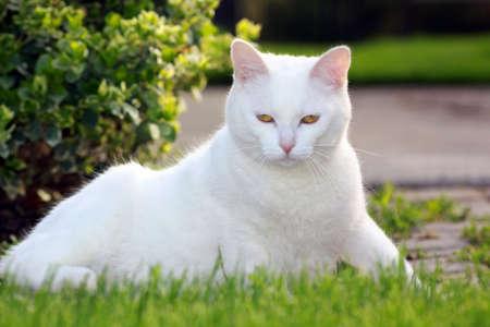 White cat laying down Banco de Imagens