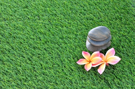 Plumeria and stones on the grass photo