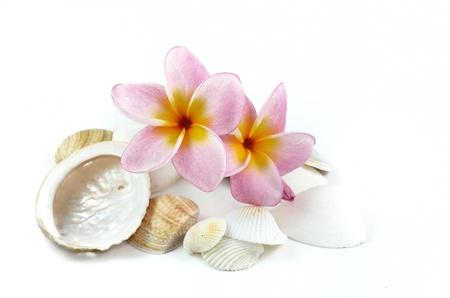 Plumeria bloemen en schelpen