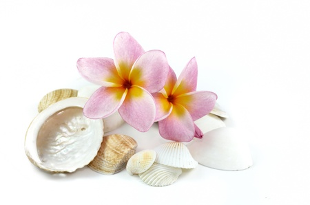Plumeria flowers and sea shells Stock Photo