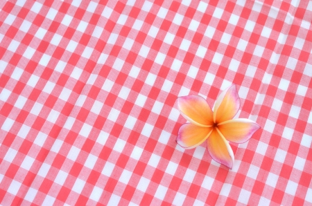Frangipani flower on red checkered cloth texture background photo