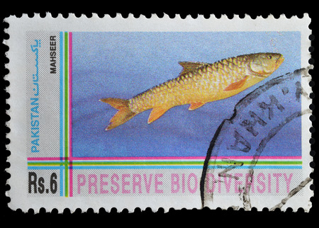 mahseer: PAKISTAN - CIRCA 1995   postage stamp printed by Pakistan, shows Mahseer fish, circa 1995 Editorial