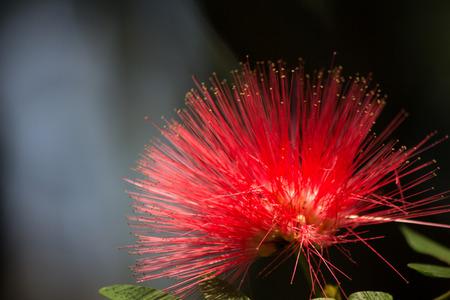 spa still life: flowers nature