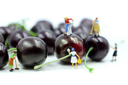 Miniature people : Maid or Housewife cleaning cherry,Food and health concept.