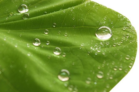 Water drops on leaf Stock Photo - 7486941