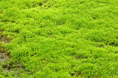 Green lichen Stock Photo - 7486970