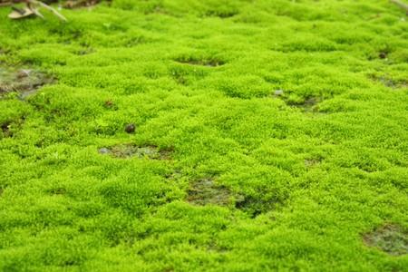 Green lichen Stock Photo - 7486995