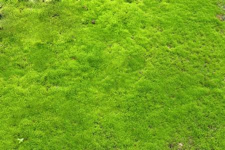 Green lichen Stock Photo - 7487027
