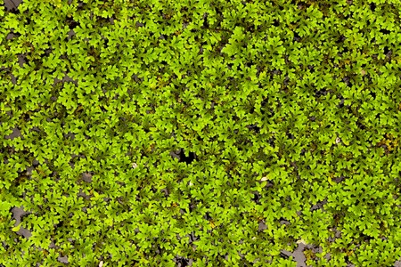 Moss in the water Stock Photo - 7702961