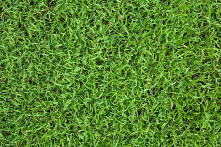 vis�o: Fresh spring grass top view in the morning, dews on grass can be seen.