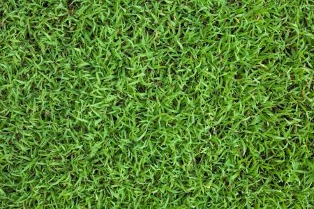 Vue de dessus printanier herbe dans la matinée, rosées sur herbe peut être vu.