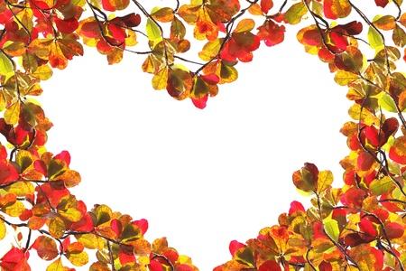almond tree: Red Foliage Autumn Over White, Indian Almond Tree