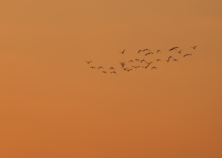 Bird Flock Silhouette At Sunset photo