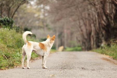 Esperando Lonely Dog