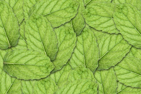Mint Leaf Background photo