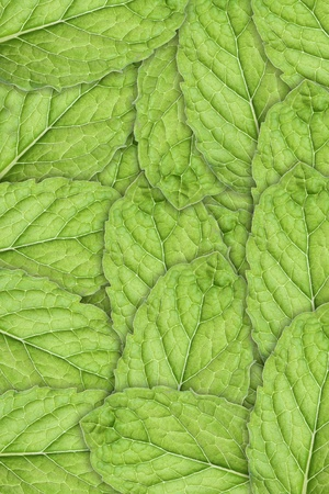 Mint Leaf Background