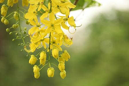 Beautiful Yellow Flower Stock Photo - 9486128