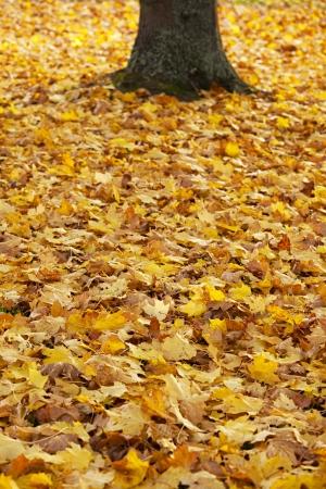 Autumn Stock Photo - 16061437