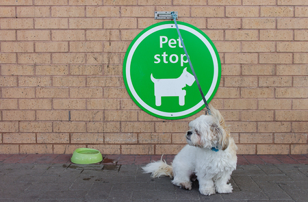 superstore: A dog waiting outside superstore