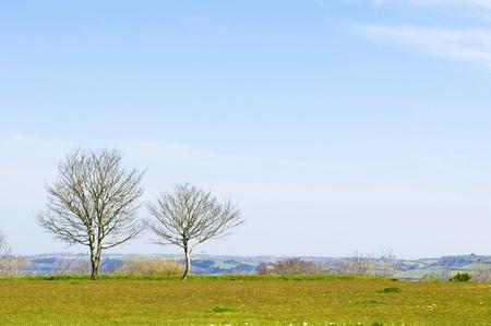 Tree under blue sky background