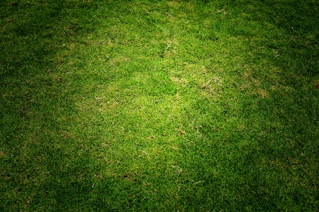 Green grass with beautiful lighting Stock Photo
