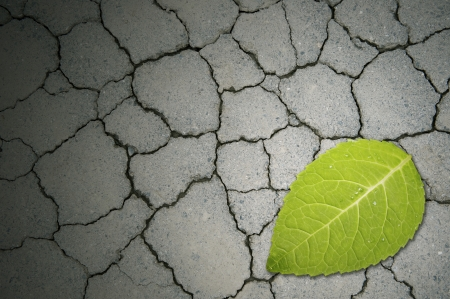 Leaf tree on the cracked cement