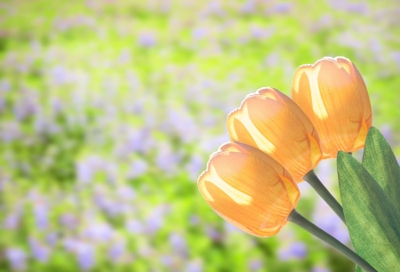 Yellow tulip flower with beautiful garden background