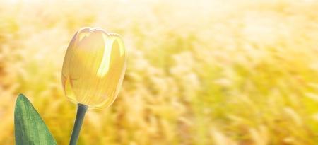 Yellow tulip flower with beautiful background Stock Photo - 13849560