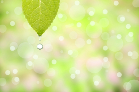 Water drop from the leaf with beautiful green background