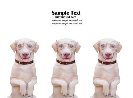 Dog puppets isolated on white background