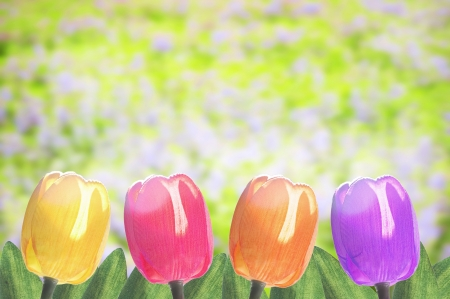 Colorful tulip flower with beautiful garden background Stock Photo