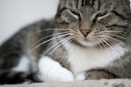 fondo para bebe: cerca de un gato
