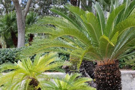 radiacion solar: verde de las palmeras de la selva