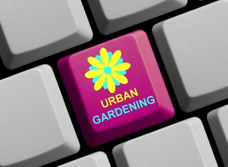 urban gardening: Urban gardening online Stock Photo