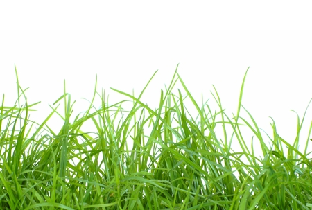 exempted: Isolated fresh green gras with white background Stock Photo