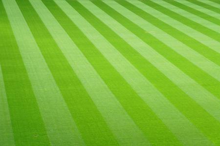lawn grass: green football field grass background