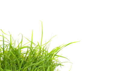 page down: Isolated fresh green grass in the corner Stock Photo