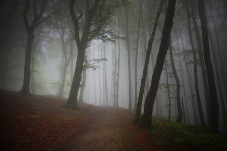 Dark Autumn Forest with beech trees on a foggy day Banco de Imagens