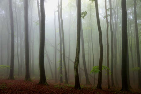 Autumn scenary with fog in forest