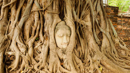 provenance: Buddha head in tree roots
