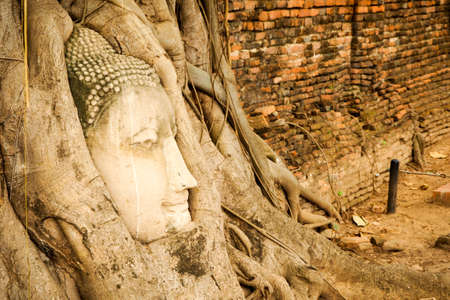 grapple: Buddha head in tree roots