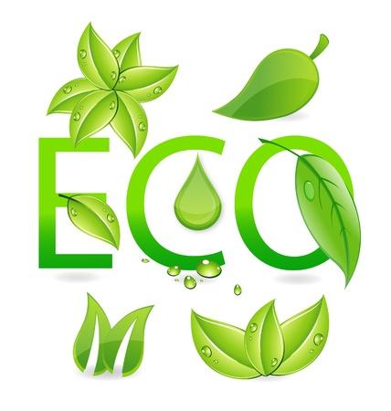 nature eco leafs symbols set Vector