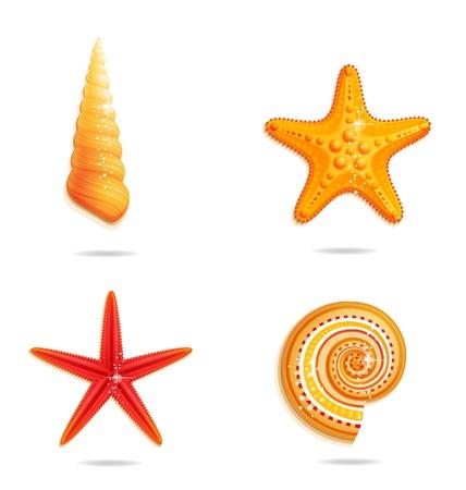 cockle: tropical sea symbols set on the white