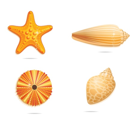 cockle: abstract  yellow sea symbols set Illustration
