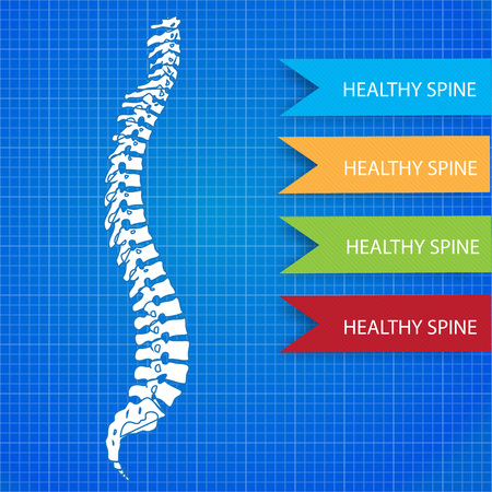 Medic spine human on the blueprint background Illustration