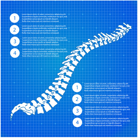 Beautiful timeline infographic medic spine human on the blueprint background. Clean and elegant style. Illustration