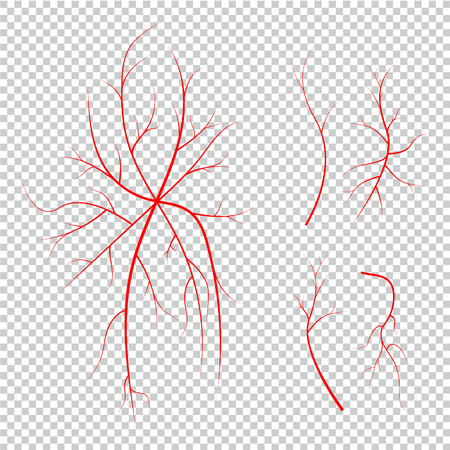 Collection of human eye veins, red blood vessels, blood system. Illustration