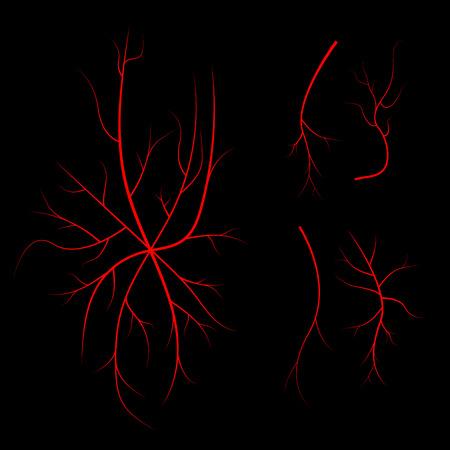 Human blood veins, red vessels on black background