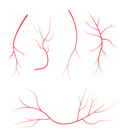 bloodstream: Human blood veins, red vessels on black background. Illustration